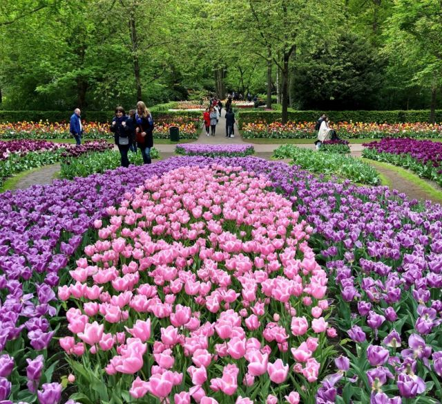Keukenhof Flower Festival, Holland